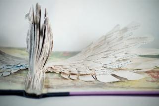 BirdBooks13