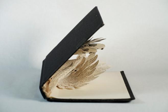 BirdBooks31