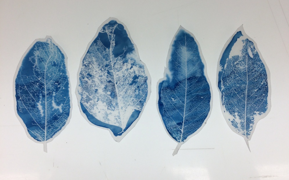 Close up of cyanotype photograms of leaves