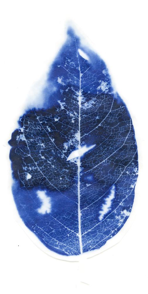 blueleaves026