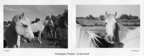 horses-france